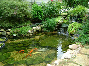 Garden-Pond-Build-Dover-2